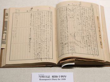 <strong>Kumagusu's Diary</strong><br> Kumagusu kept a diary for over 60 years, from the day when he was 13 to his last years.<br> The content includes details on different things from his daily research and reading, observations and descriptions of organisms, things that happened to him and his family, to his bank account balance, the times he woke up and went to bed, and records of the weather and his messages sent and received.<br> The diary provides valuable clues that help us know Kumagusu better.